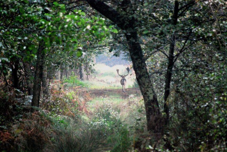 Wald mit Wild statt verhärteten Fronten.